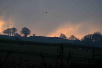 Buzzard_sunset_3