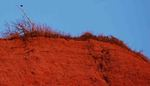 Red_cliff_copy