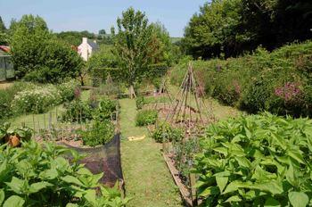 Veg_garden06